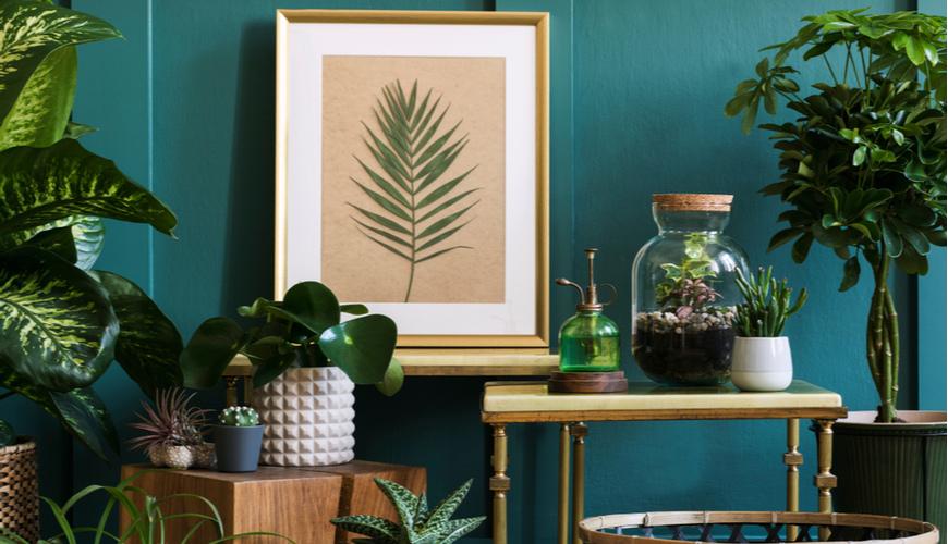 Kamerplanten kopen? | Alle soorten planten bij GroenRijk | GroenRijk.nl