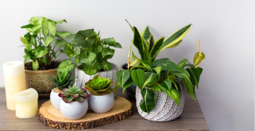 Kunstplanten koop je bij GroenRijk | GroenRijk.nl