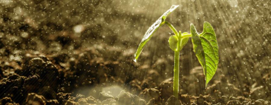 Plantenvoeding en verzorgingsproducten kopen bij GroenRijk