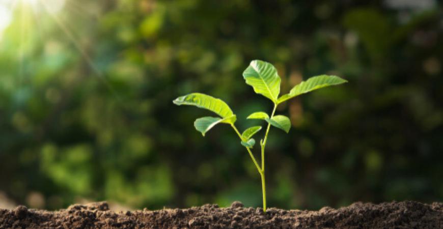 Plantverzorging en plantenvoeding koopt u bij GroenRijk