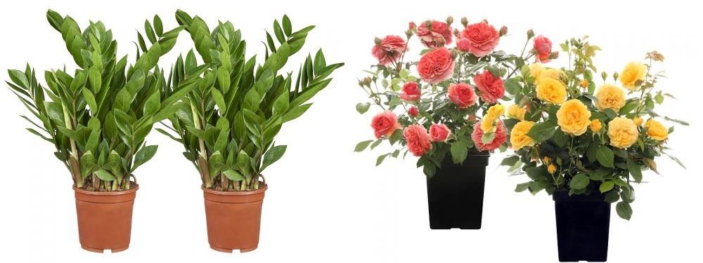 Beste kwaliteit planten vind je bij GroenRijk | Bezoek een van onze vestigingen | GroenRijk.nl