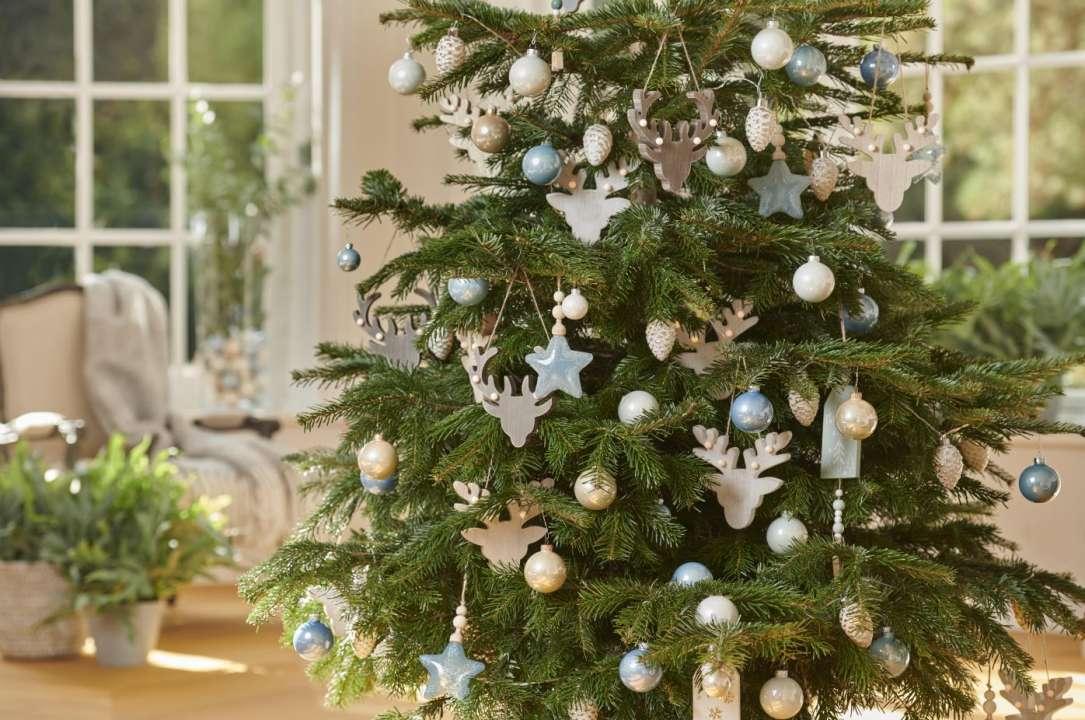 Verzorging Kerstboom.Kerstbomen Groenrijk