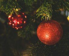 Kerstbomen Groenrijk Nunspeet Epe Overige Content Groenrijk