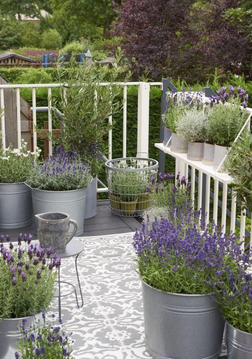 Lavendel In Grote Pot.Balkonplant 2018 Lavendel Nieuws Groenrijk