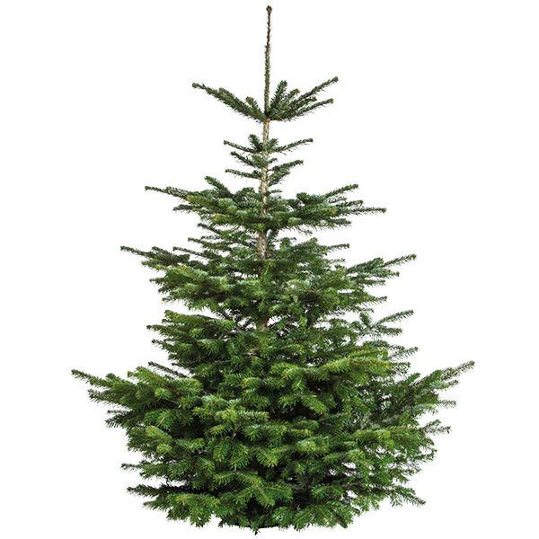 Nordmann Kerstboom Groenrijk